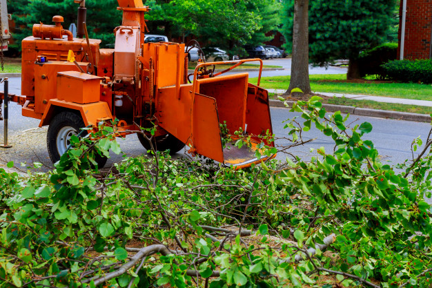 How tree movers can help you in moving big trees?
